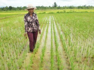 Ms. Him Sothea is an example of the woman who could change her life from nobody to a well-recognized organic rice farmer.