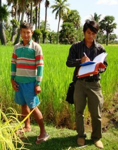 An inspector, accompanied by the owner, checks an organic rice field.